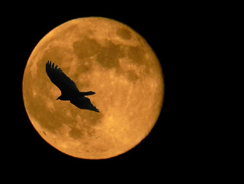 October 2020 A Blue Moon Month With Two Full Moons Including One On Halloween Fall River Reporter